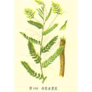 astragalos-o-memvranodis-astragalus-membranaceus-idiotites