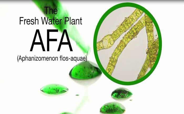 galazoprasina-fikia-a-f-a-i-proti-morfi-zois-kai-aftoiasis-fresh-water-afa