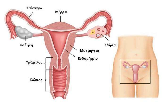 inomiomata-antimetopisi-me-fisikous-enallaktikous-tropous