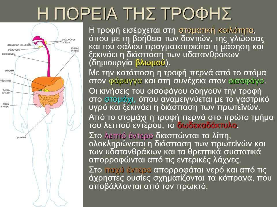 pepsi-igia-meros-a-genika-i-pepsi-plirofories-gia-tous-idatanthrakes