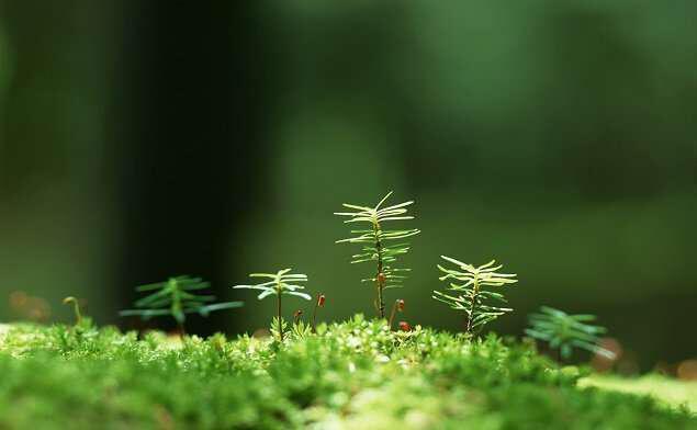 Η Φύσις είναι δίπλα μας: Βρες την περιοχή Natura κοντά σου