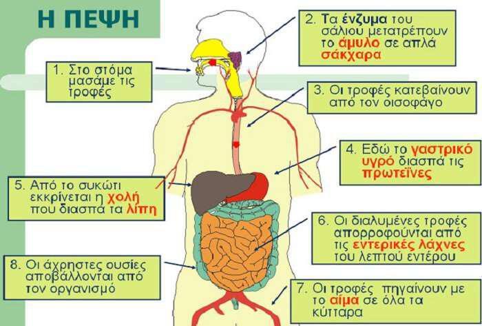pepsi-kai-igeia-meros-c-vitamines-ihnostoixeia-nero-kai-enzima