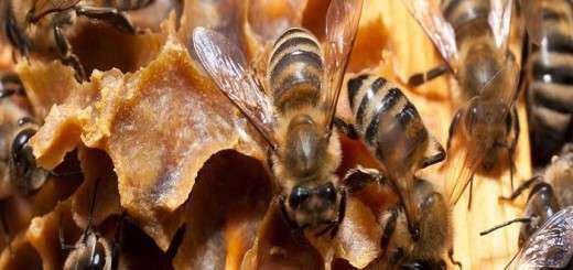 therapeia-asthenion-me-ti-hrisi-propolis