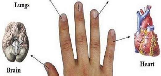 kathe-dahtylo-syndeetai-me-dyo-organa-methodoi-therapeias-se-5-lepta