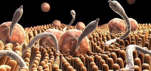 votana-kai-syntages-poy-exafanizoun-enterika-parasita-skoulikia