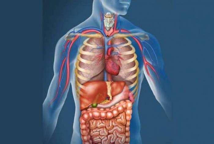 syntagi-apotoxinosis-lemfikou-systimatos-kai-katharismou-tou-somatos