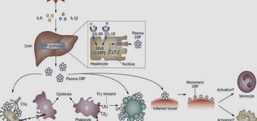 c-antidrosa-proteini-kai-flegmoni-vradyflegis-karkiniki-bomba