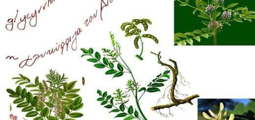 glykoriza-kai-i-aparamilli-therapeftiki-tis-drasi-kai-hrisi