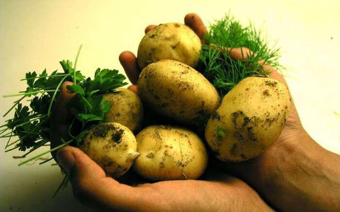 giati-den-prepei-na-vazete-tis-patates-sto-psygeio