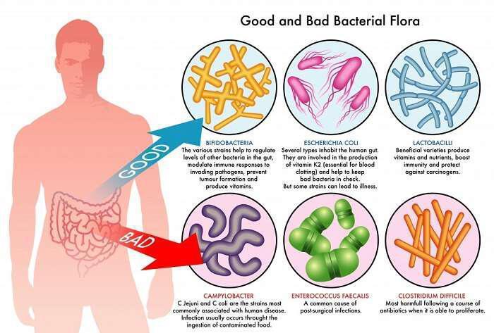 darmbakterien probiotika