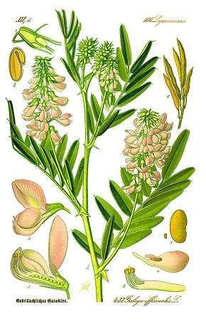 imero-trifylli-galega-adynatizei-kai-rytmizei-to-zaharo