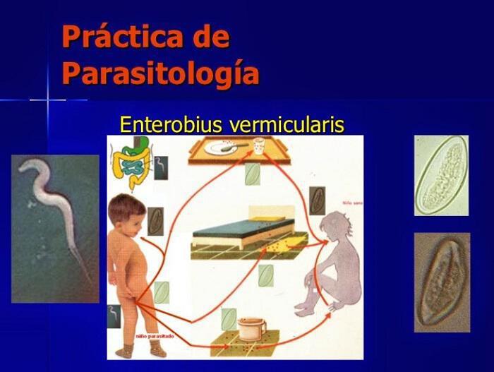 oxyouriasi-skoulikia-sto-entero-symptomata-prolipsi-antimetopisi