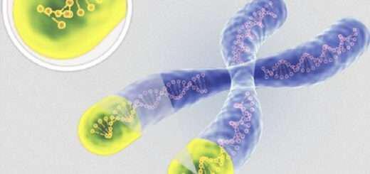 telomeri-o-pio-akrivis-deiktis-neotitas-kai-makrozoias
