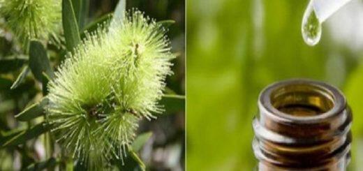 tea-tree-i-teiodentro-polytimes-hriseis-kai-ti-na-prosexete