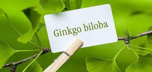 ginkgo-biloba-prostatevei-egkefalo-kai-orheis-apo-ta-varea-metalla