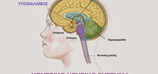 ypofysi-ypothalamos-ormones-vlaves-poiotites