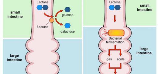 mipos-eheis-dysanexia-sti-laktozi
