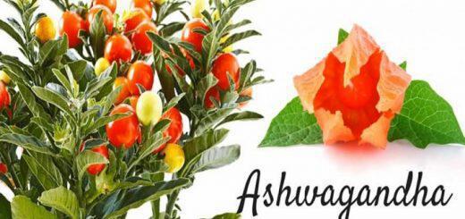 ashwagandha-ena-akomi-prosarmogonovotano-me-pollapla-ofeli