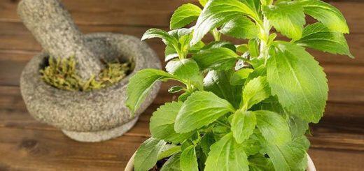 ehete-fytepsei-stevia-deite-pos-na-tin-hrisimopoiisete