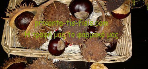 agriokastano-agriokastania-idanika-gia-flevitida-aimorroides-kirsous-kaki-kukloforia-aimatos
