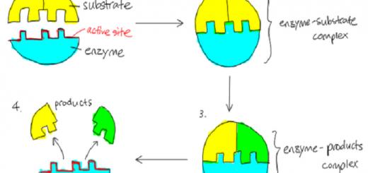 enzyma-serrapeptasi-natokinasi-gia-inokystiki-inosi-pnevmona-karkino-inomyomata-endomitriosi-symfyseis