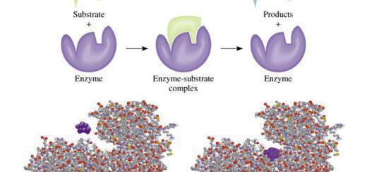 enzyma-diatrofi-threfeis-i-frazeis-to-soma-sou