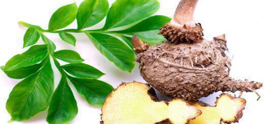riza-konjac-konjak-glykomannani-syntelei-stin-kali-leitoyrgia-tou-peptikou-kai-adynatizei