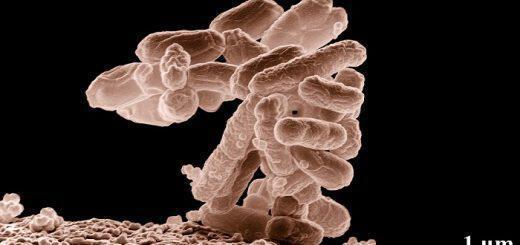 bacterio-e-coli-ti-to-prokalei-kai-symptomata