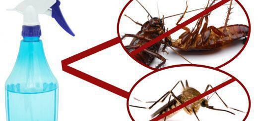 ftiahnoume-to-sprei-pou-exafanizei-kounoupia-katsarides-myges-se-molis-2-ores