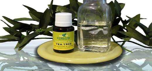 tea-tree-i-magiki-stagona-pou-ta-kani-ola
