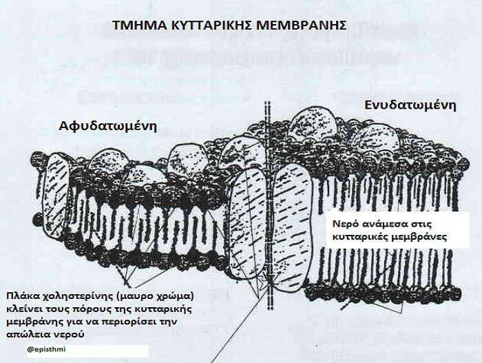 memvrani-kyttarou-xolisterini-nero