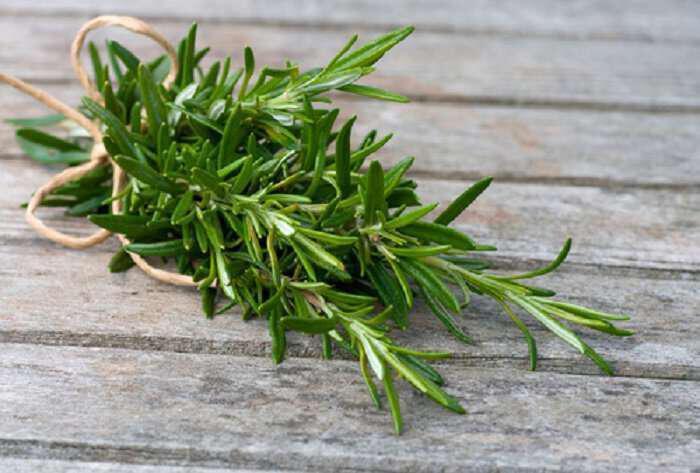Δεντρολίβανο το εξαιρετικό βότανο