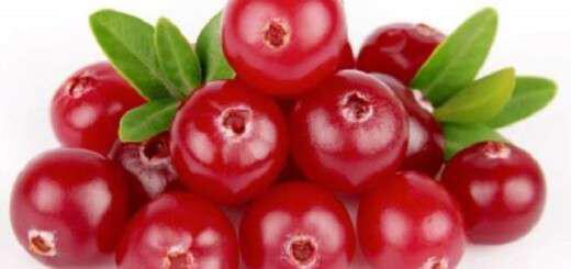 fingi-cranberry-kranmperi-aspida-tou-ouropiitikou