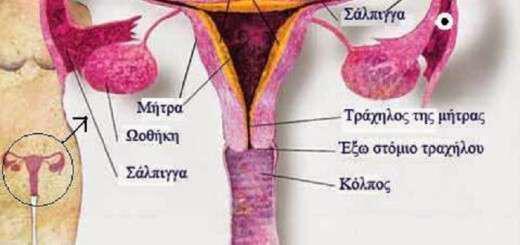 progesteroni-i-gynaikeia-ormoni
