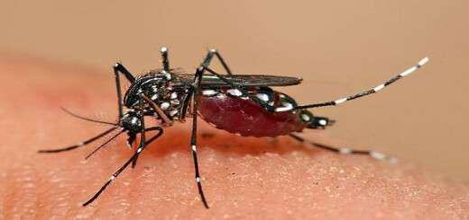 o-ios-zika-kai-i-parapliroforisi