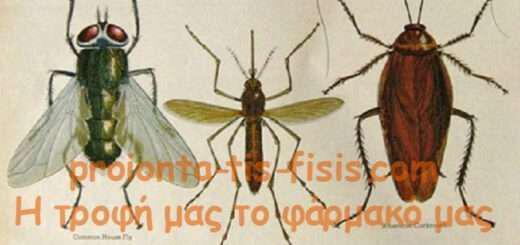 pos-antimetopizo-horis-himika-kounoupia-myges-kai-katsarides