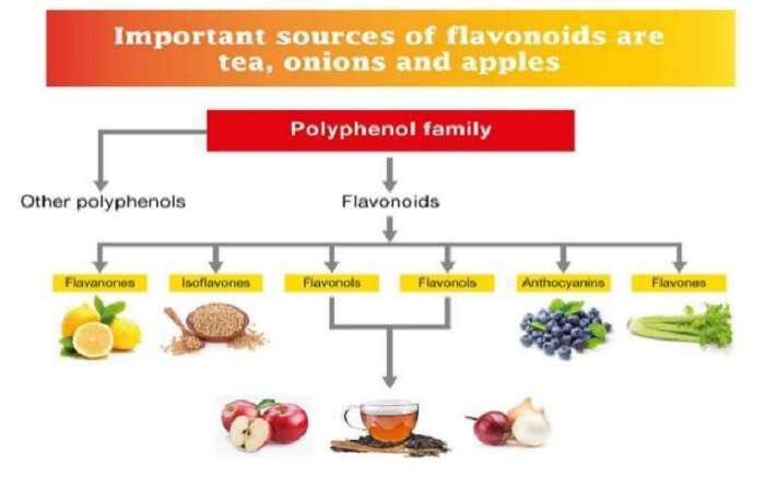 Φλαβονοειδή: Ποια είναι, θεραπευτικές ιδιότητες και πηγές