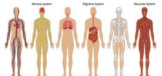 oi-5-pio-epikindynes-toxines-pou-katastrefoun-tin-ygeia-mas
