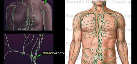 lemfiko-systima-symvallei-stin-amyna-tou-organismou-tin-epidiorthosi-iston-kai-tin-apomakrynsi-toxinon
