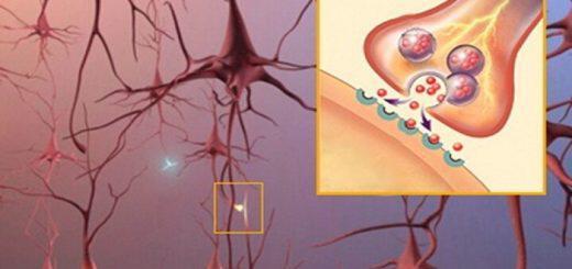 nevrodiavivastes-oi-himikoi-aggelioforoi-tou-egkefalou