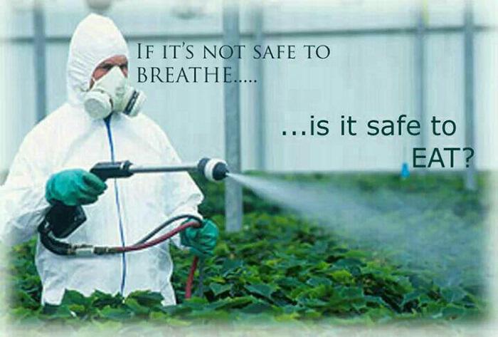 Φυτοφάρμακο glyphosate: Καταστρέφει σχεδόν το σύνολο των ανθρώπινων κυττάρων