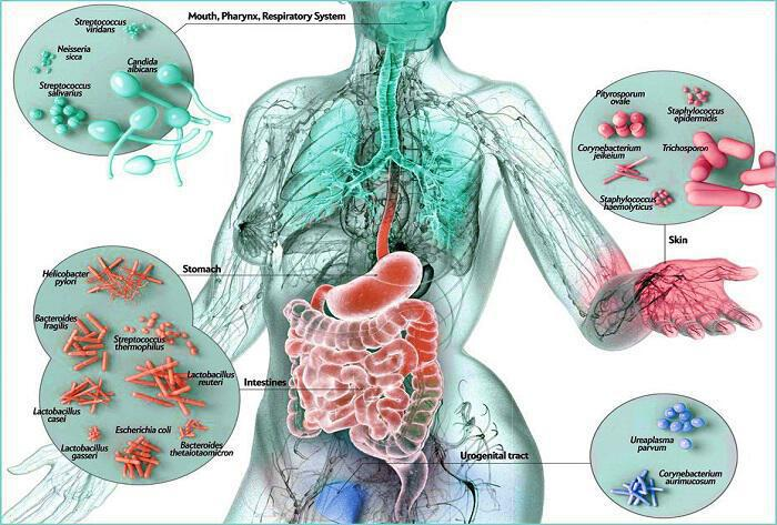 ena-katestrameno-mikrobioma-synepagetai-mia-megali-lista-astheneion