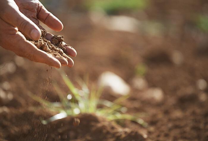 Χώμα το Αντικαταθλιπτικό: Προάγει τη Διάθεση όπως το Πρόζακ