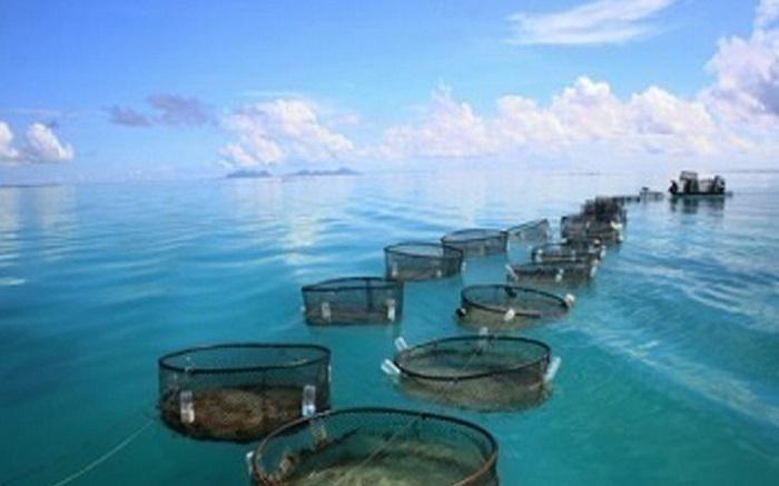Χρ.Στελακάτος-Ιχθυολόγος: Τρώτε ψάρια ιχθυοτροφείων γεμάτα καρκινογόνα φορμόλη και φάρμακα